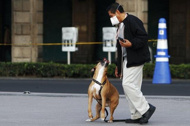 Chó được huấn luyện ngửi phát hiện virus corona chính xác gần 100% - 3