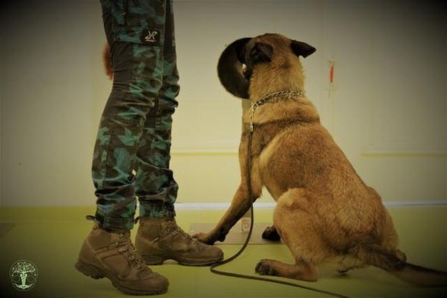 Chó được huấn luyện ngửi phát hiện virus corona chính xác gần 100% - 4