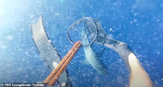 Rùng mình cảnh nhóm câu cá nhảy xuống biển đúng luồng cá mập - 1