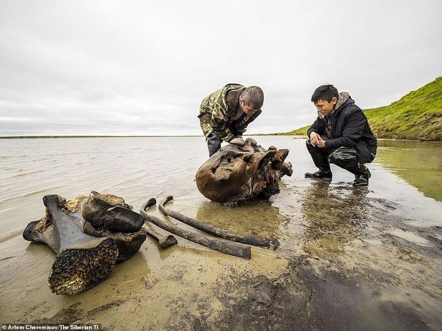 Tìm thấy hài cốt của voi ma mút vạn năm tuổi còn cả da và mô mềm - 2