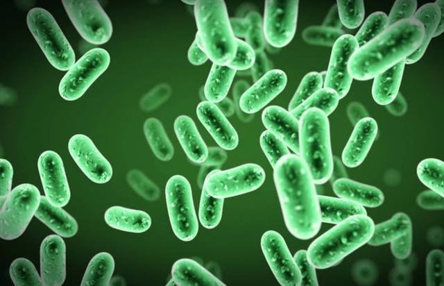 Bổ sung Probiotics, biện pháp tăng cường đề kháng hiệu quả, phòng dịch - 1