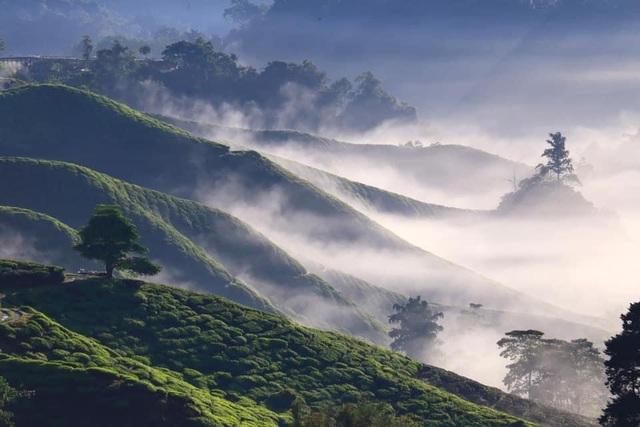 Vẻ đẹp mê hoặc của đồi chè Long Cốc, Phú Thọ: Nơi trốn dịch lý tưởng - 2