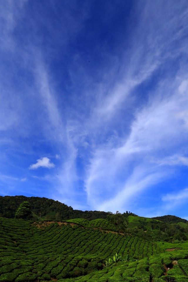 Vẻ đẹp mê hoặc của đồi chè Long Cốc, Phú Thọ: Nơi trốn dịch lý tưởng - 10