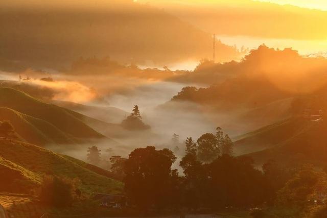 Vẻ đẹp mê hoặc của đồi chè Long Cốc, Phú Thọ: Nơi trốn dịch lý tưởng - 9