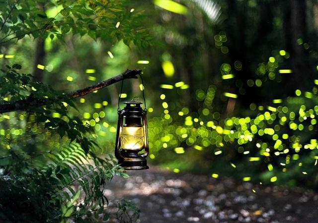 Ninh Bình: Lạc vào khu rừng đom đóm lung linh huyền ảo tựa chốn thần tiên - 1