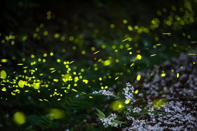 Ninh Bình: Lạc vào khu rừng đom đóm lung linh huyền ảo tựa chốn thần tiên - 10