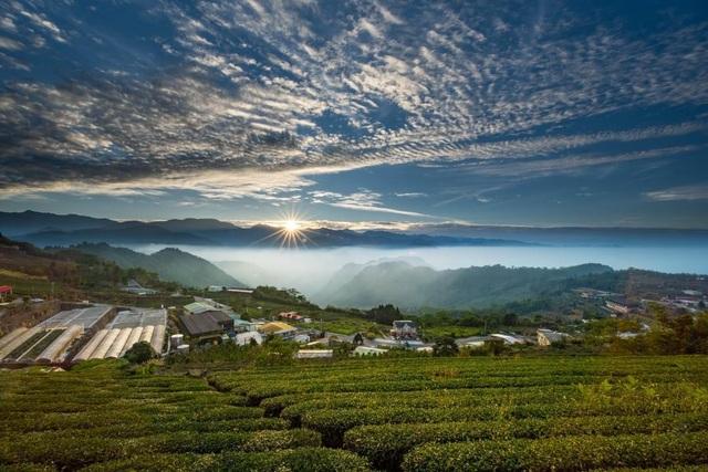 Vẻ đẹp mê hoặc của đồi chè Long Cốc, Phú Thọ: Nơi trốn dịch lý tưởng - 1