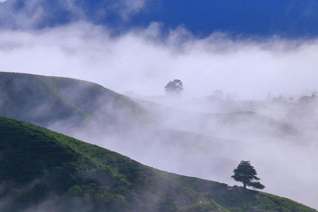 Vẻ đẹp mê hoặc của đồi chè Long Cốc, Phú Thọ: Nơi trốn dịch lý tưởng - 8