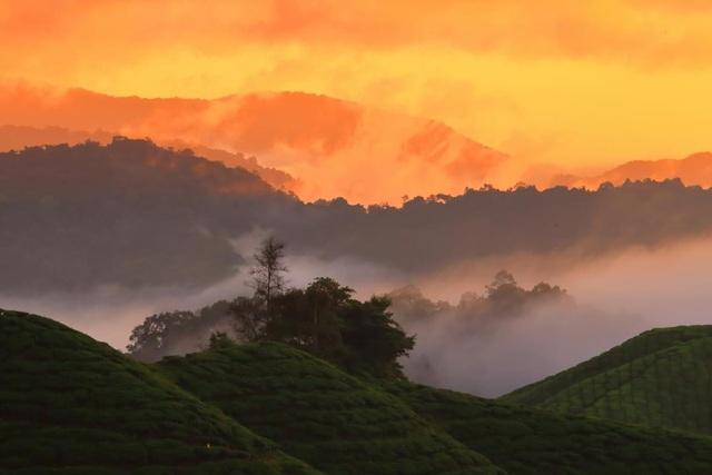 Vẻ đẹp mê hoặc của đồi chè Long Cốc, Phú Thọ: Nơi trốn dịch lý tưởng - 4