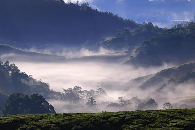 Vẻ đẹp mê hoặc của đồi chè Long Cốc, Phú Thọ: Nơi trốn dịch lý tưởng - 7