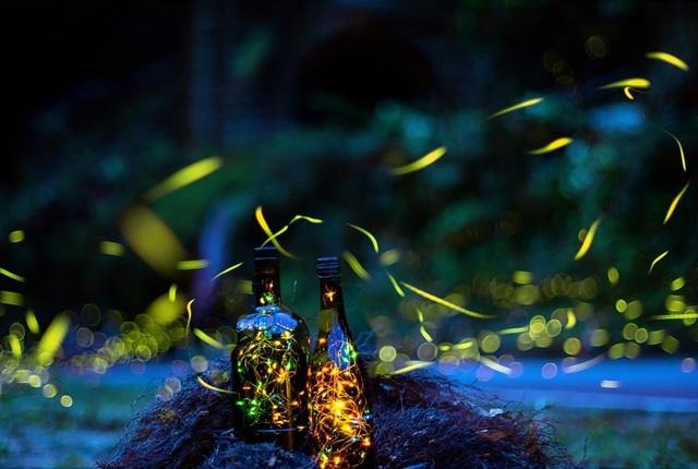 Ninh Bình: Lạc vào khu rừng đom đóm lung linh huyền ảo tựa chốn thần tiên - 7