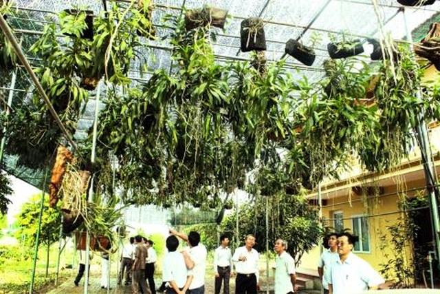 Bộ Nông nghiệp: Truyền thông tung hê lan tiền tỷ rất nguy hiểm - 1