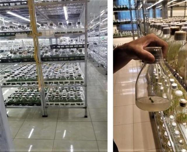 Bộ Nông nghiệp: Truyền thông tung hê lan tiền tỷ rất nguy hiểm - 2
