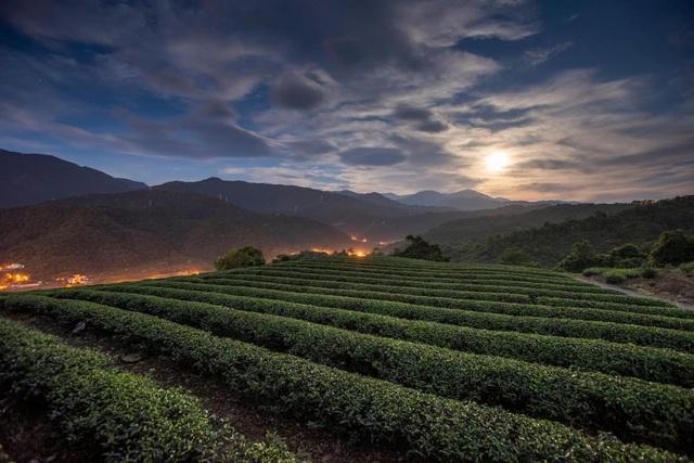 Vẻ đẹp mê hoặc của đồi chè Long Cốc, Phú Thọ: Nơi trốn dịch lý tưởng - 3