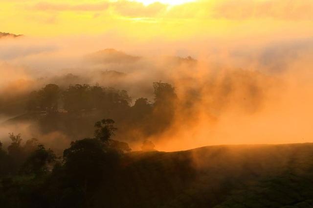 Vẻ đẹp mê hoặc của đồi chè Long Cốc, Phú Thọ: Nơi trốn dịch lý tưởng - 5