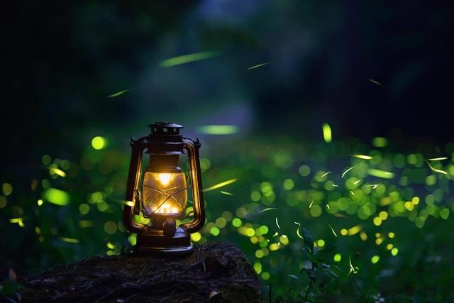 Ninh Bình: Lạc vào khu rừng đom đóm lung linh huyền ảo tựa chốn thần tiên - 4