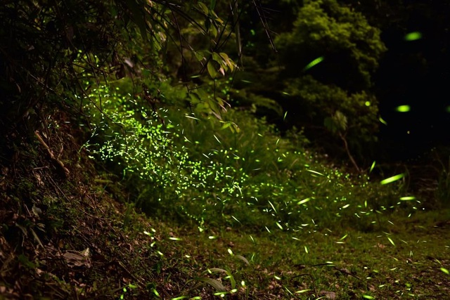 Ninh Bình: Lạc vào khu rừng đom đóm lung linh huyền ảo tựa chốn thần tiên - 8