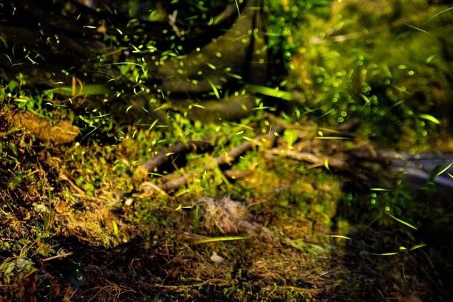 Ninh Bình: Lạc vào khu rừng đom đóm lung linh huyền ảo tựa chốn thần tiên - 6