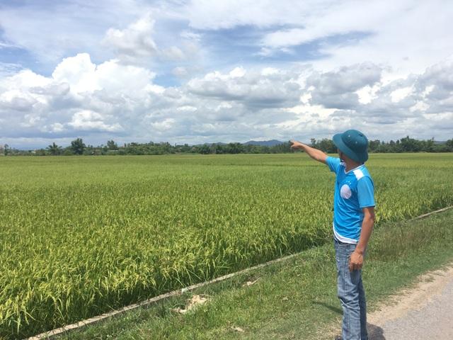 Diễn tiến phức tạp vụ hàng chục hộ dân bị chiếm dụng đất nông nghiệp - 3