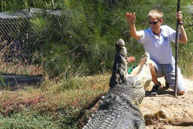 Cá sấu gần 100 tuổi, nặng hơn một tấn đã chết - 1