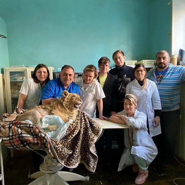 Giải cứu sư tử bị đánh gãy chân để không bỏ chạy khi chụp ảnh cùng du khách - 3