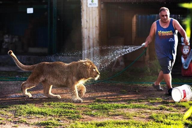 Giải cứu sư tử bị đánh gãy chân để không bỏ chạy khi chụp ảnh cùng du khách - 4