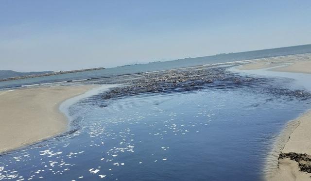 Phó Chủ tịch Nghệ An chỉ đạo xử lý vụ hồ tôm gây ô nhiễm môi trường - 3