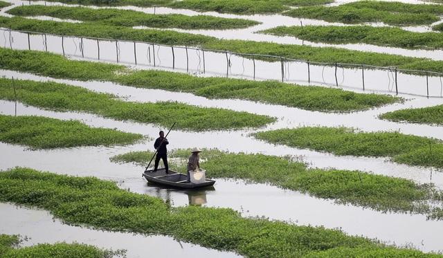 """Ham lợi, nông dân Trung Quốc  trả giá đắt vì """"nhường"""" ruộng cho tôm hùm đất - 2"""