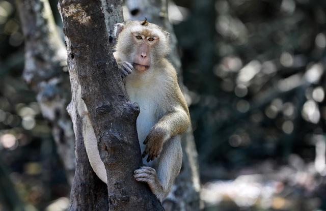 Khám phá vương quốc khỉ ở TP Hồ Chí Minh - 10