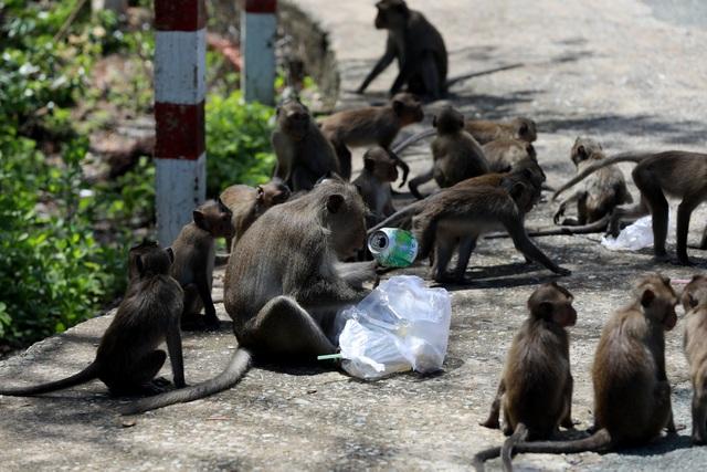 Khám phá vương quốc khỉ ở TP Hồ Chí Minh - 7