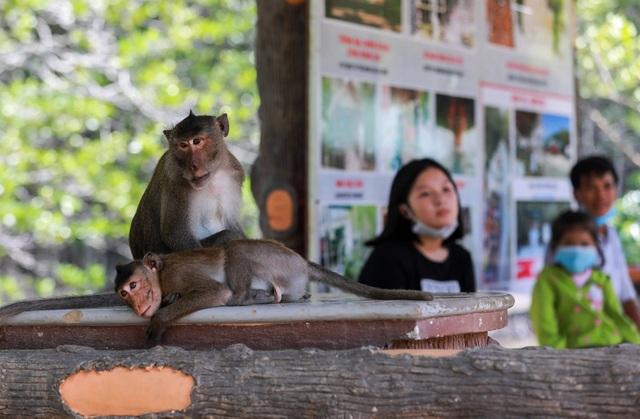 Khám phá vương quốc khỉ ở TP Hồ Chí Minh - 13