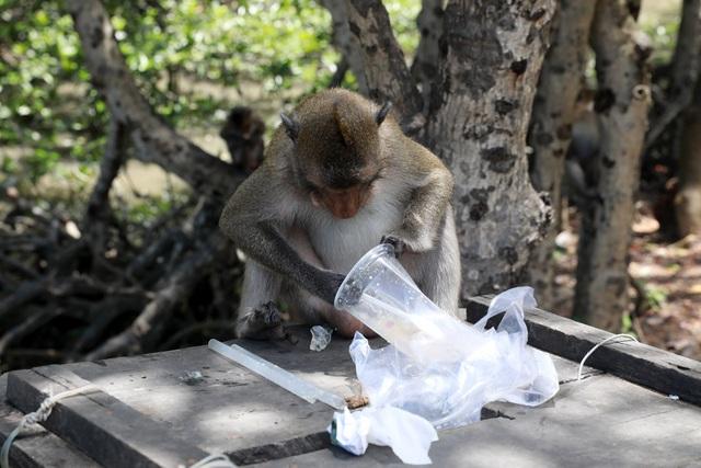 Khám phá vương quốc khỉ ở TP Hồ Chí Minh - 11