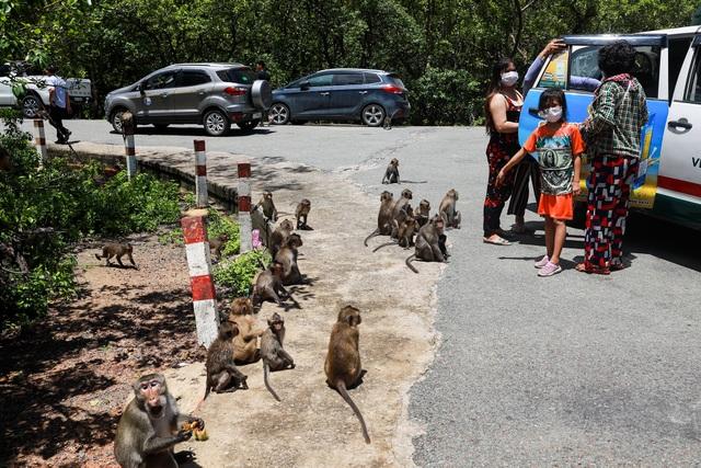 Khám phá vương quốc khỉ ở TP Hồ Chí Minh - 2