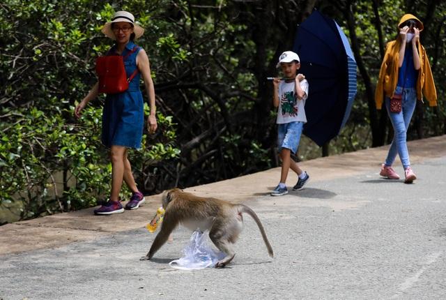 Khám phá vương quốc khỉ ở TP Hồ Chí Minh - 6