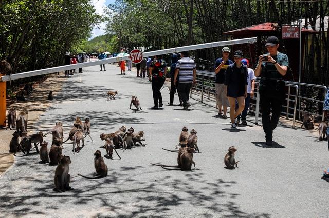 Khám phá vương quốc khỉ ở TP Hồ Chí Minh - 5