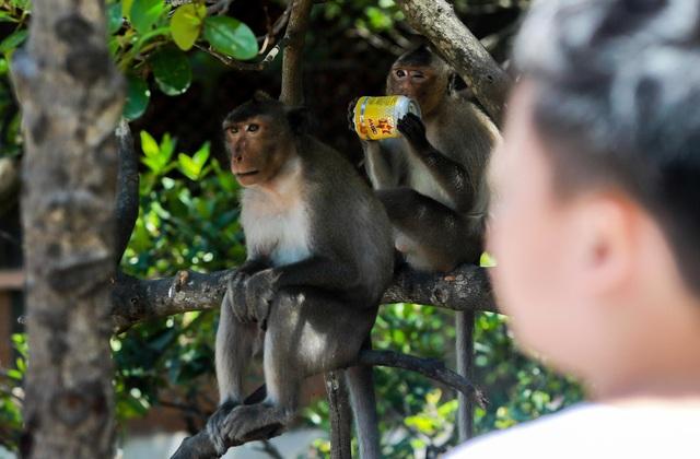 Khám phá vương quốc khỉ ở TP Hồ Chí Minh - 9