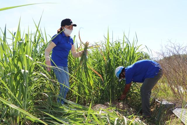 Quảng Ngãi:  Áo xanh lội ruộng tìm thức ăn cho vật nuôi khu cách ly - 2