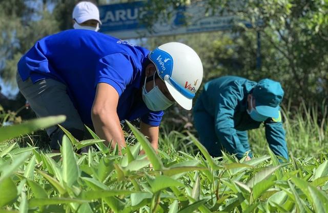 Quảng Ngãi:  Áo xanh lội ruộng tìm thức ăn cho vật nuôi khu cách ly - 4