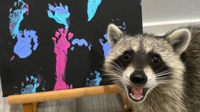 """""""Nghệ sĩ"""" gấu mèo nổi đình đám với các bức tranh tiền triệu - 1"""