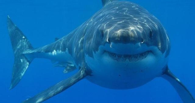 """Bí ẩn cá mập có """"giác quan thứ sáu"""" sống gần núi lửa dưới đại dương - 1"""