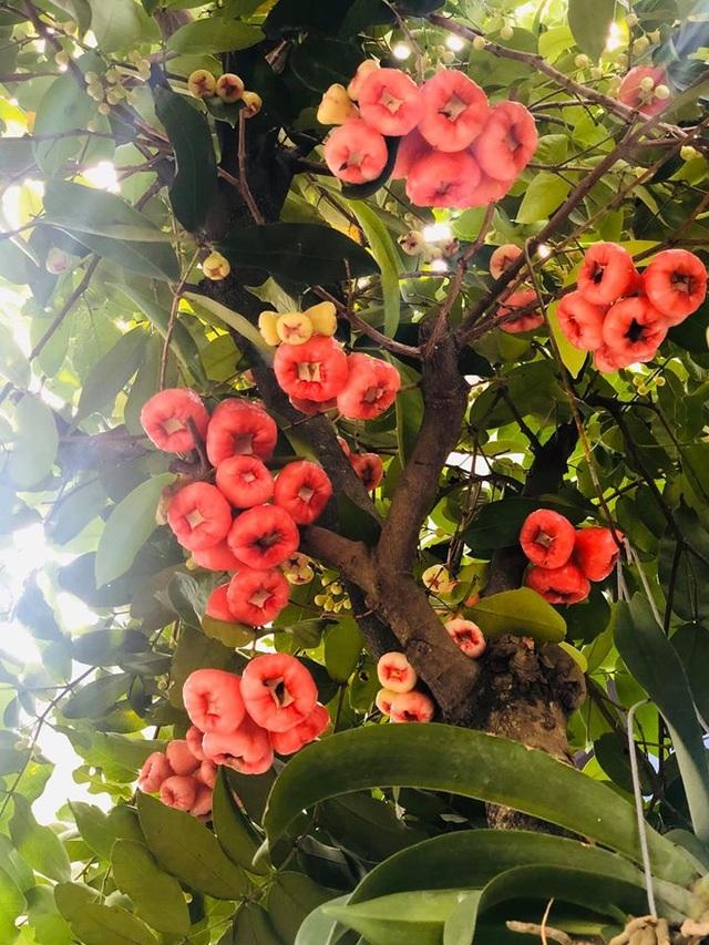 """Căn biệt thự có khu vườn """"hoa nở suốt 4 mùa"""" đẹp tuyệt ở Sài Gòn - 3"""