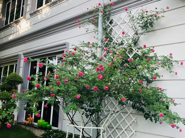 """Căn biệt thự có khu vườn """"hoa nở suốt 4 mùa"""" đẹp tuyệt ở Sài Gòn - 6"""