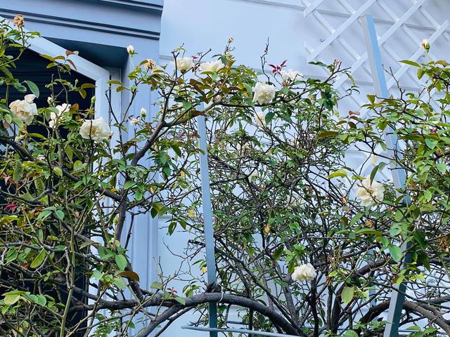 """Căn biệt thự có khu vườn """"hoa nở suốt 4 mùa"""" đẹp tuyệt ở Sài Gòn - 9"""