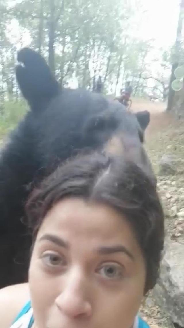 Gấu đen bị thiến sau khi ngửi tóc cô gái trẻ - 2