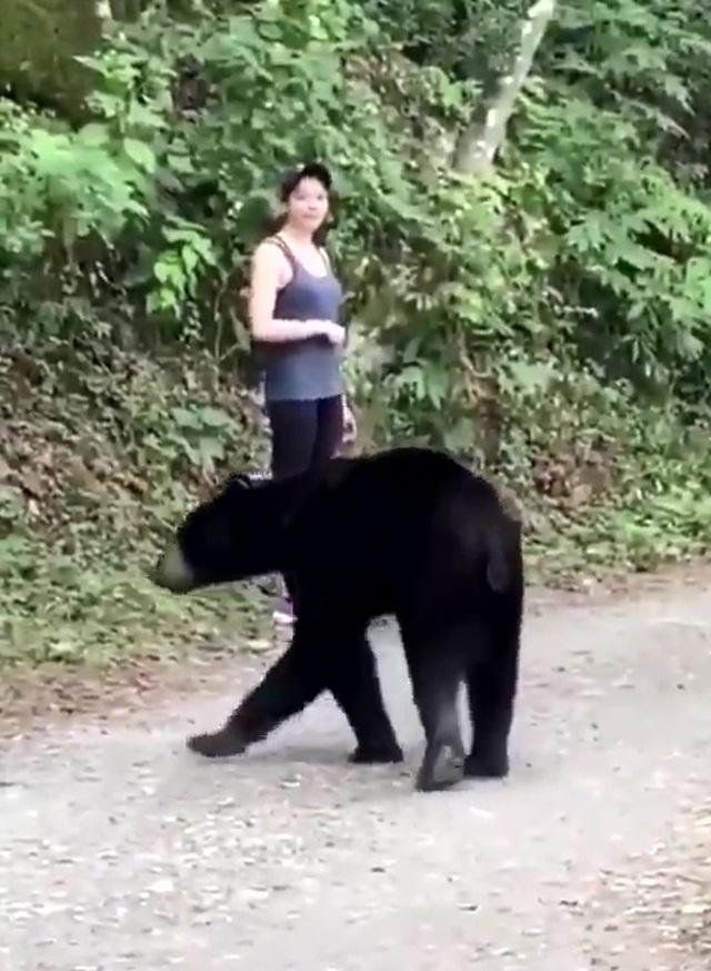 Gấu đen bị thiến sau khi ngửi tóc cô gái trẻ - 3