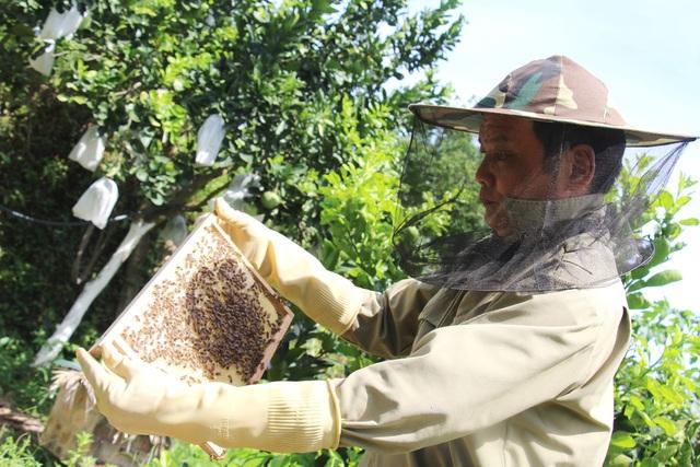 Hà Tĩnh: Làm giàu từ nuôi loài ...ruồi có độc - 1
