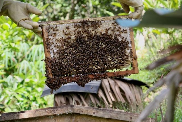 Hà Tĩnh: Làm giàu từ nuôi loài ...ruồi có độc - 2