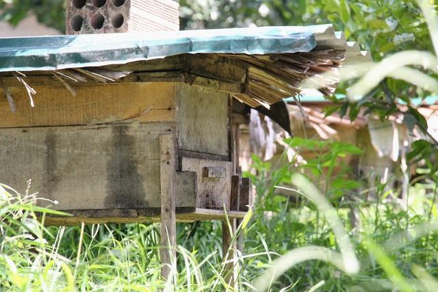 Hà Tĩnh: Làm giàu từ nuôi loài ...ruồi có độc - 3