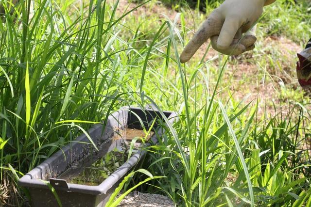 Hà Tĩnh: Làm giàu từ nuôi loài ...ruồi có độc - 7