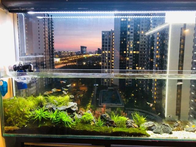 Ông bố ở Sài Gòn biến ban công thành vườn thu nhỏ với hồ cá, cây xanh - 7